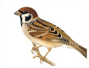 Uccelli minacciati