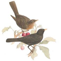 Guida all' alimentazione degli uccelli