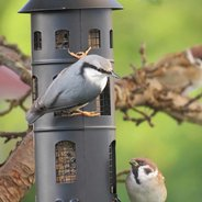 Come mangiano gli uccelli?
