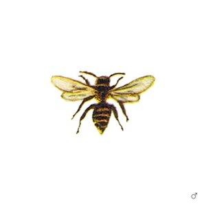 Le api solitarie