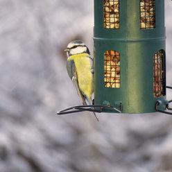 Cosa mangiano gli uccelli?
